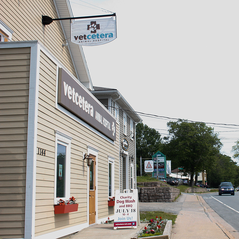 Vetcetera animal hospital and veterinarian in Bedford Halifax NS