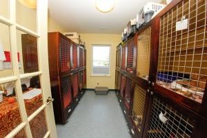 cat boarding kennel at Vetcetera Animal Hospital in Bedford NS
