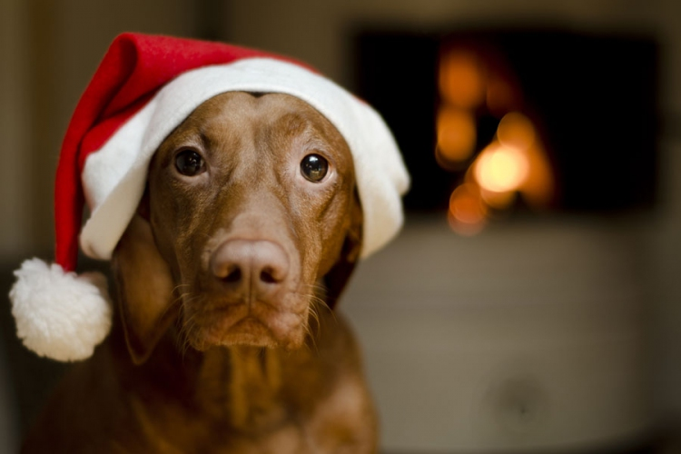 Holiday pet tips from Vetcetera Veterinarian and Animal Hospital in Bedford NS
