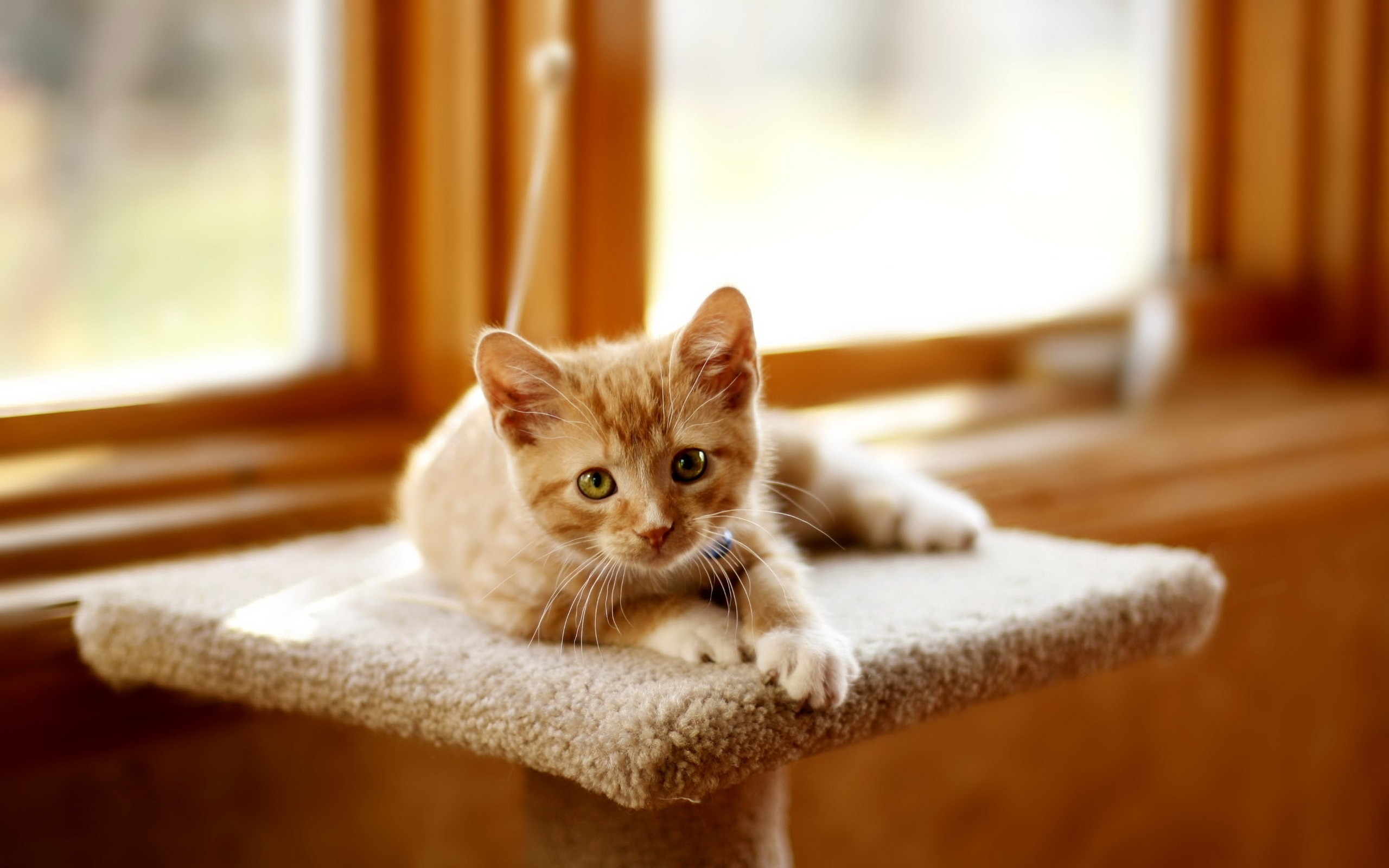 Dealing with cats scratching furniture, tips from Vetcetera Veterinarian and Animal Hospital in Bedford NS
